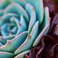 A Succulent for Shez