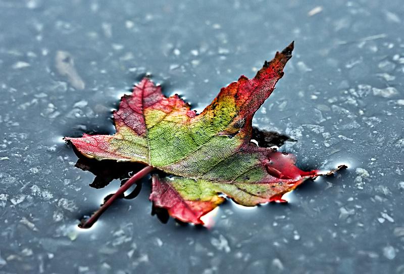 Autumn's Gift