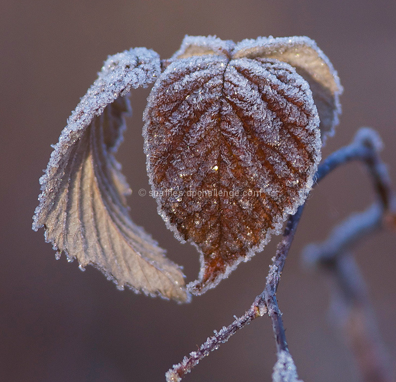 Frosted fall
