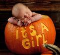 Harvest Baby
