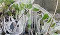Frozen Spiral