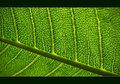 Botany Life Lines