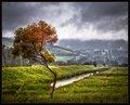 Rain and Shine on the Bent Tree