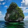 "The trees of ""no name"" Island"