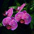 Botany: Horticulture