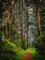 The Enchanted Forest: A Scottish Fairytale