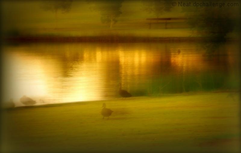 Vanishing Ducks