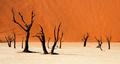 Death Vlei Namibia