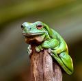Pondering Amphibian