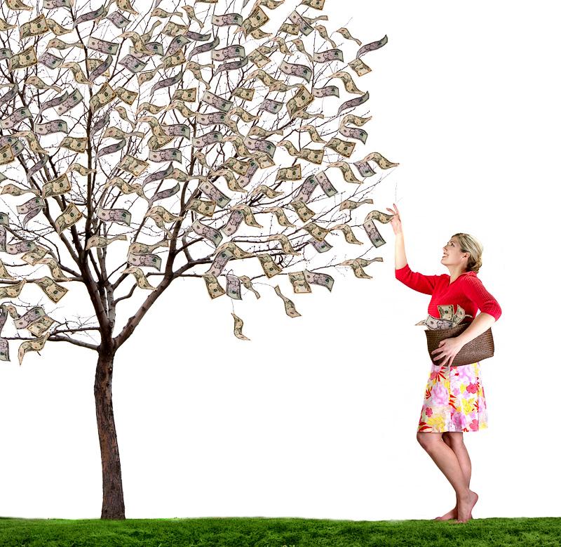 The Magical Money Tree by sjhuls - DPChallenge
