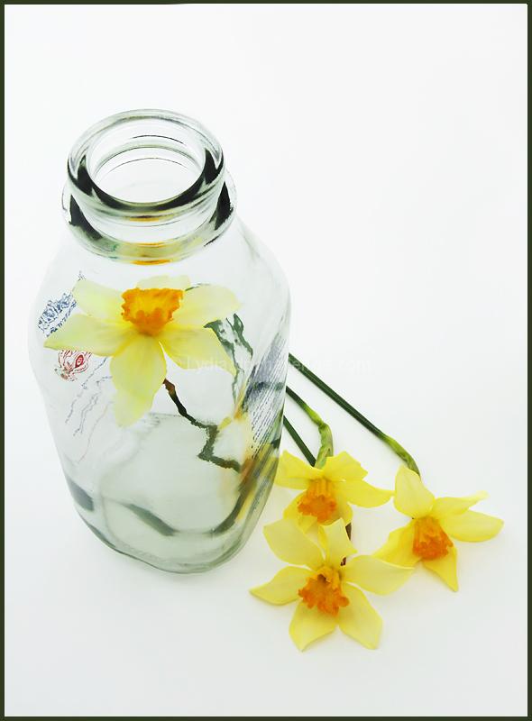 Lid Off A Daffodil