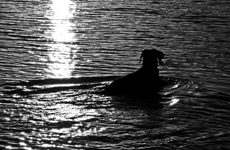 Sunset swim DP