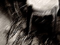 Copyrighted_Image_Reuse_Prohibited_1006919.jpg