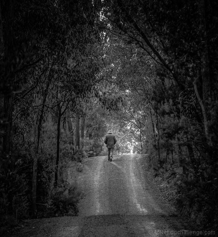 A Light Up Ahead