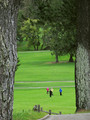 Foursome in the Fairway