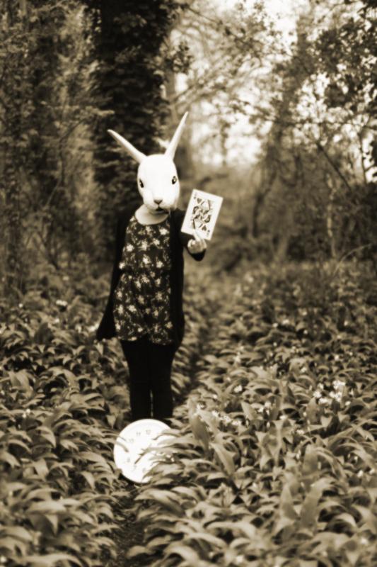 White Rabbit Red Queen