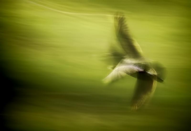 Motion of flight