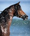 Seahorse. Ocean spray.