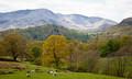 Towards Lingmoor Fell