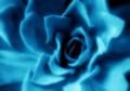 Succulent In Blue