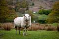 On England's Pleasant Pastures