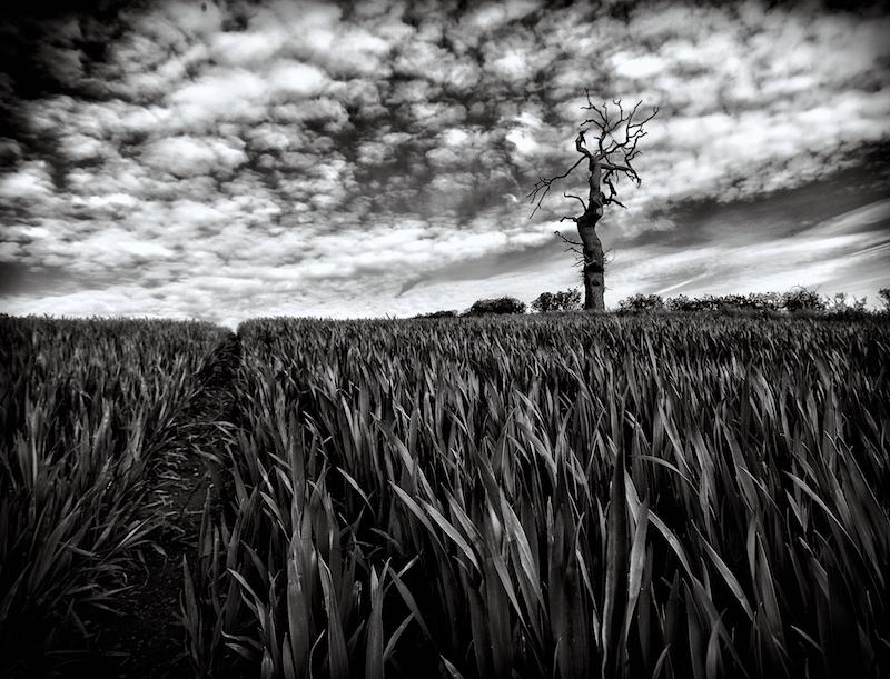 Hilltop Farm
