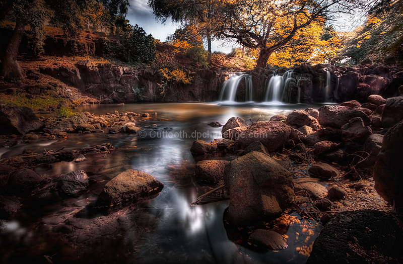 Brook's Creek