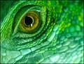 i see green.