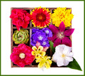 A RAINBOW OF FLOWERS FOR SHEZ