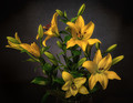 Lilies for you Shez