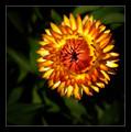 Flower of Eden :)