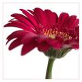 Flower for Shez