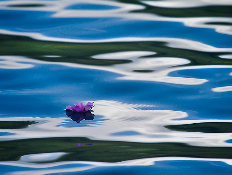 Wild Rose Water