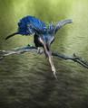 bird40tecture3