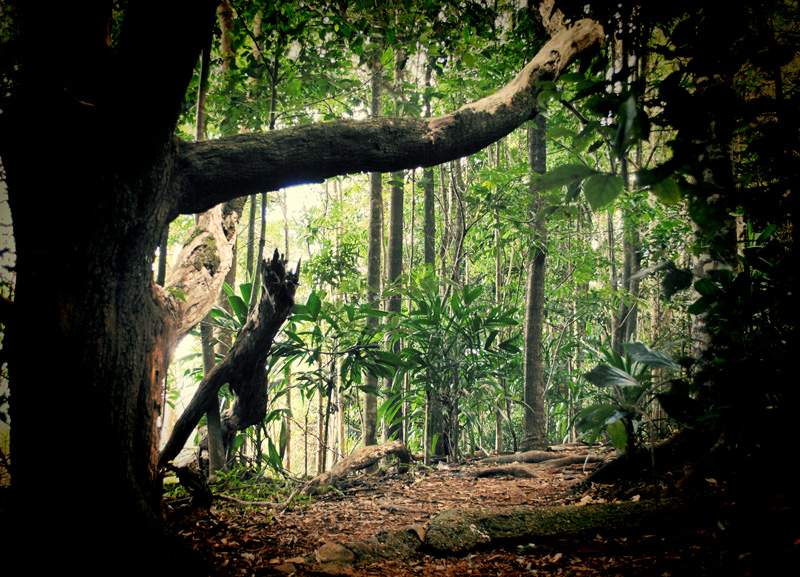 the forest how to see characvter