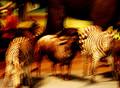 Man in blurry wild animals land.