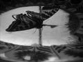platterfly