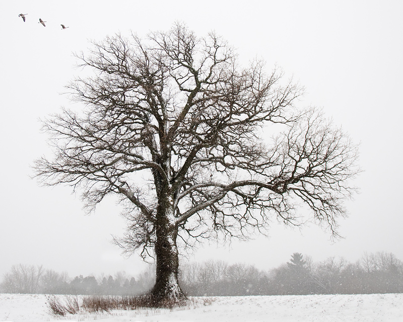 The Tree Amigos