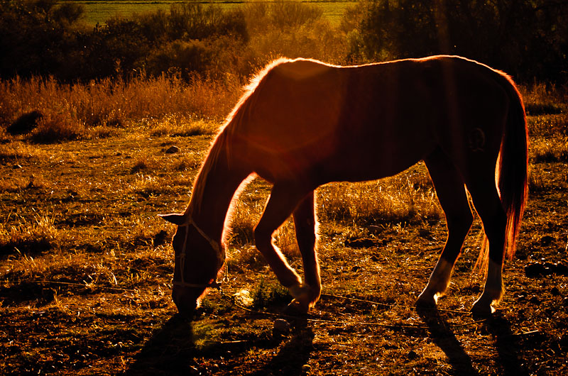 Horse after a long day