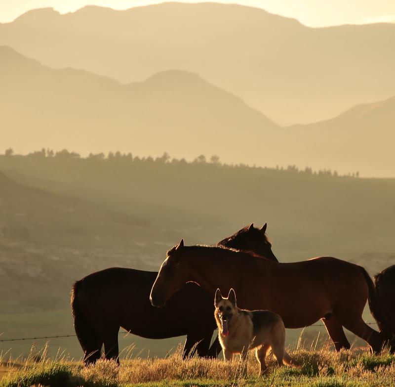 Horse and Hound