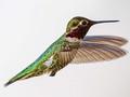 Bird, James Bird