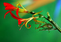 Say it with Flowers  - Mantis Mating