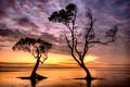 Mangrove silhouette