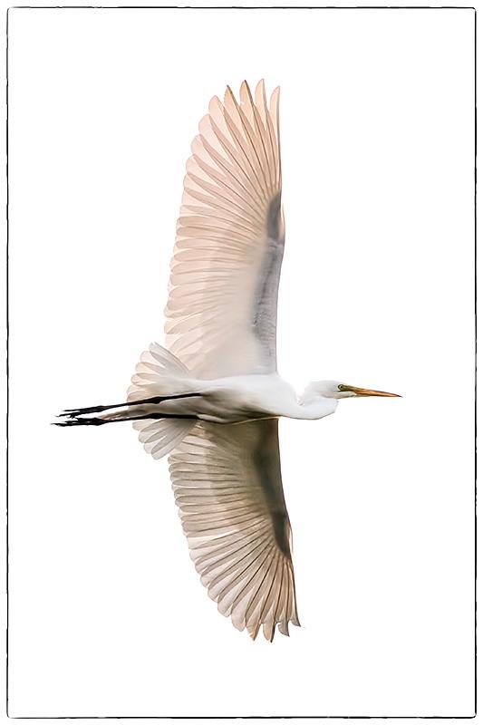 Freebird!