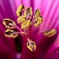 Pollen Tree