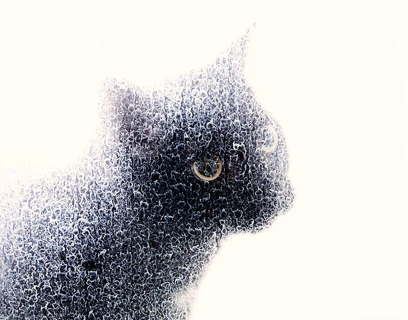 Intent Cat
