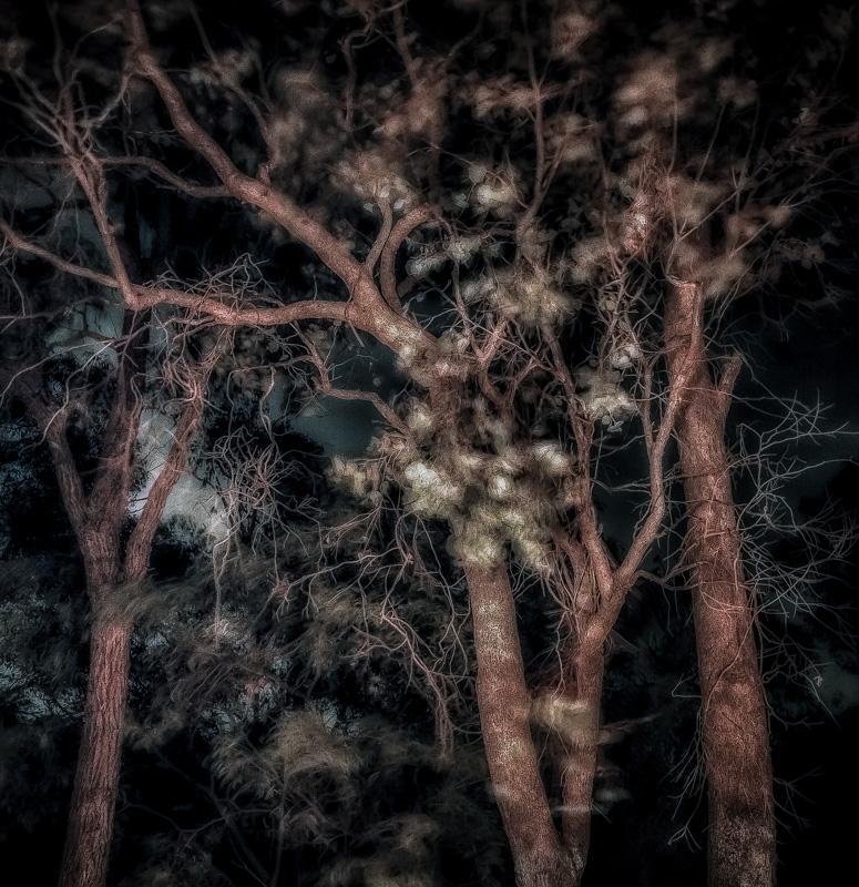 Nightweb