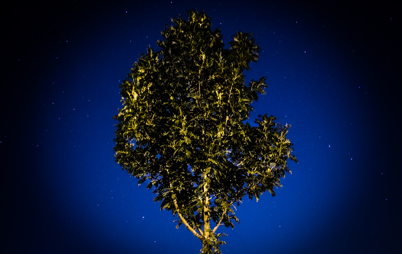 One tree and a handful of stars