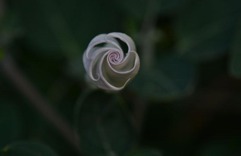Pretty Pinwheel