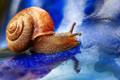 A Snails Pace